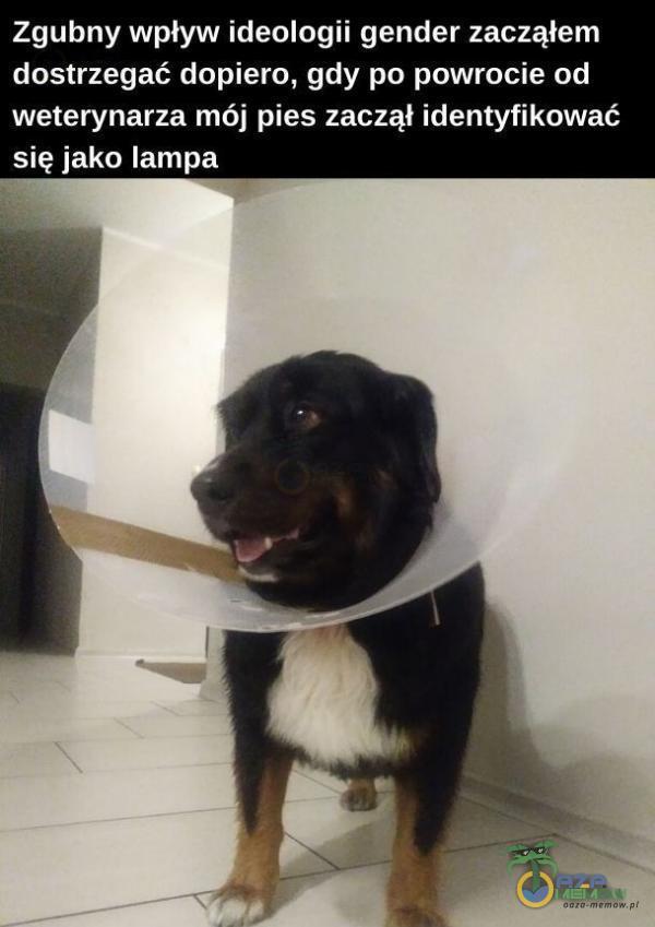 Zgubny wpływ ideologii gender zacząłem dostrzegać dopiero, gdy po powrocie od weterynarza mój pies zaczął identyfikować się jako lampa