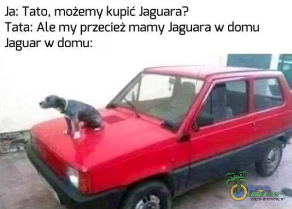 la: Tato, możemy kupić Jaguara? Tata: Ale my przecież mamy laguara w domu Jaguar w domu: