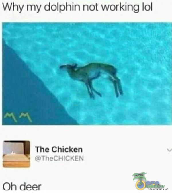 Why my dolphin not working lol The Chicken TheCHlCKEN Oh deer