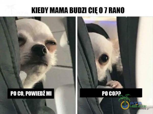 Kill MAMA Bllllll GlĘll ! BARI]