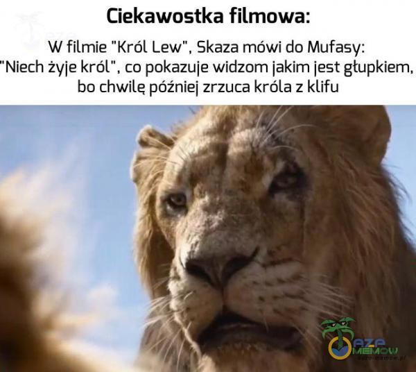 """Ciekawostka filmowa: W filmie Król Lew , Skaza mówi do Mufasy: Nierh """"zx/[e król , co pokazu1e widzom ]aklm ]251 głupkiem. bo chwile poźniej zrzuca króla : klifu"""
