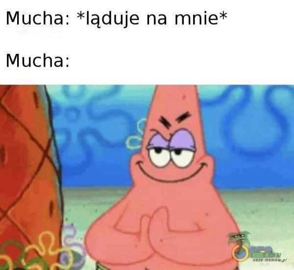Mucha: *ląduje na mnie* Mucha: