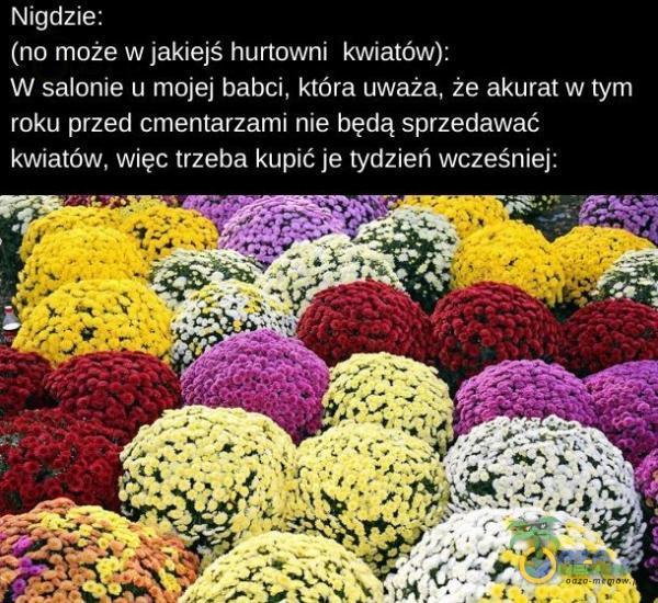Nigdzie: (no może w jakiejś hurtowni kwiatów): W salonie u mojej babci, która uważa, że akurat w tym roku przed cmentarzami nie będą sprzedawać kwiatów, więc trzeba kupić je tydzień wcześniej: