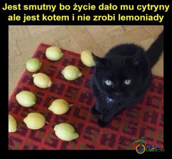 PC W io dri ei sel e l91 a 11 ale jest kotem i nie zrobi lemoniady