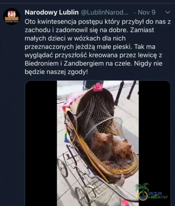 Narodowy Lublin • Nov9 v Oto kwintesencja postępu który przybył do nas z zachodu i zadomowil się na dobre. Zamiast małych dzieci w wózkach dla nich przeznaczonych jeżdżą małe pieski. Tak ma wyglądać przyszłość kreowana przez lewicę...