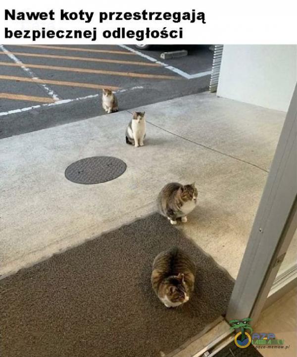 Nawet koty przestrzegają bezpiecznej odległości A