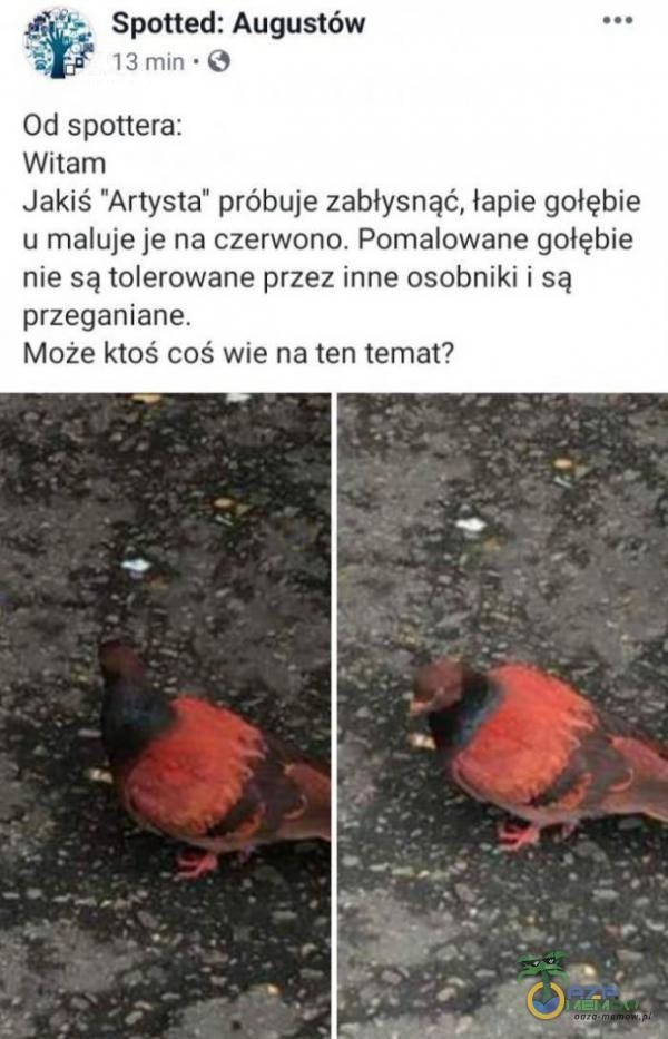 Spotted: Augustów 13 min • O Od spottera: Witam Jakiś Artysta próbuje zabłysnąć, łapie gołębie u maluje je na czerwono. Pomalowane gołębie nie są tolerowane przez inne osobniki i są przeganiane. Może ktoś coś wie na ten temat?