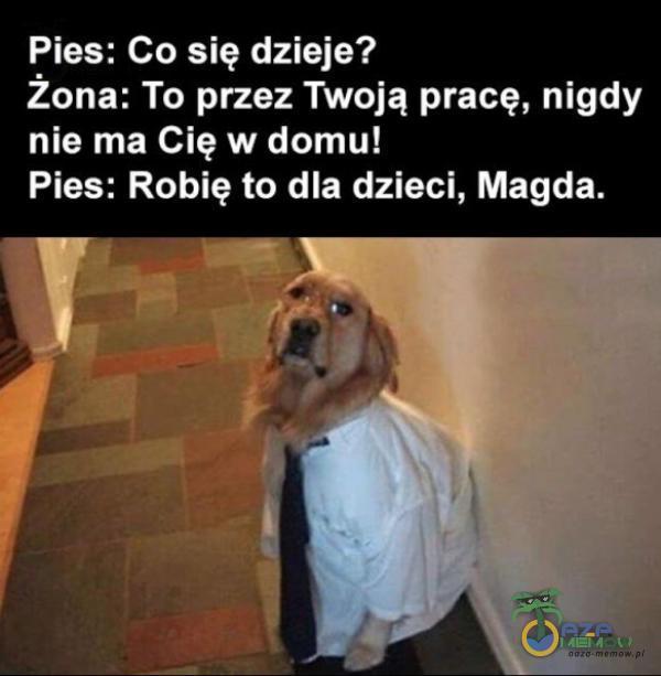 Pies: Co się dzieje? Żona: To przez Twoją pracę, nigdy nie ma Cię w domu! Pies: Robię to dla dzieci, Magda.