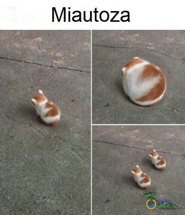 Miautoza | Je e : 3