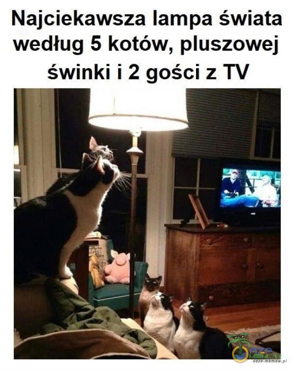 Najciekawsza lampa świata według 5 kotów, uszowe] świnki i 2 gości z TV