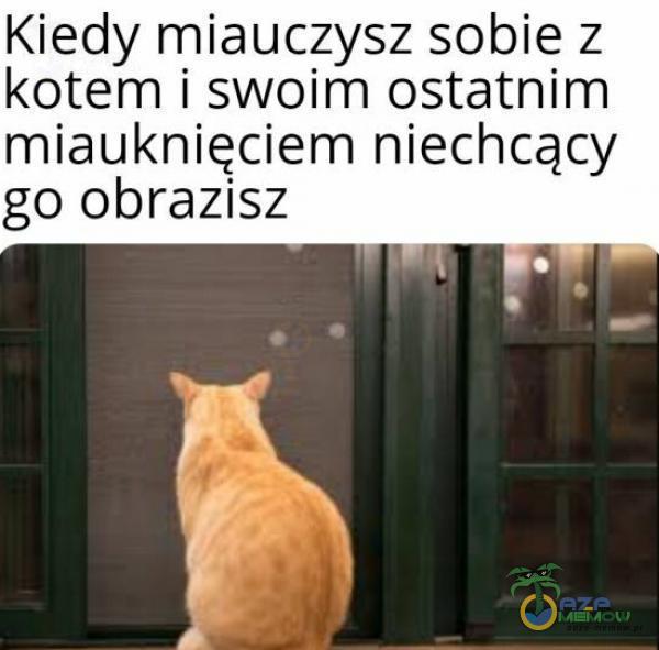 Kiedy miauczysz sobie z kotem i swoim ostatnim miauknięciem niechcący go obrazisz