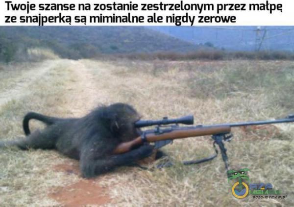 Twoje szanse na zostanie zestrzelonym przez małpę ze snajperka sa miminalne ale nigdy zerowe