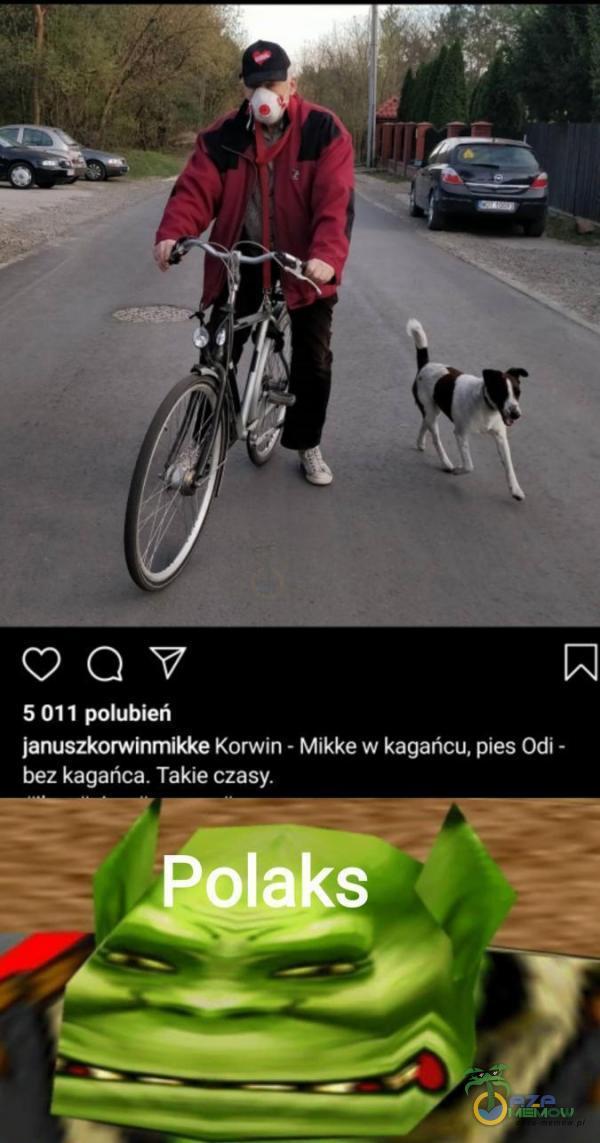 OQY 5011 polubień januszkorwinmikke Korwin- Mikke w kagańcu, pies Odi - bez kagańca: Takie czasy.