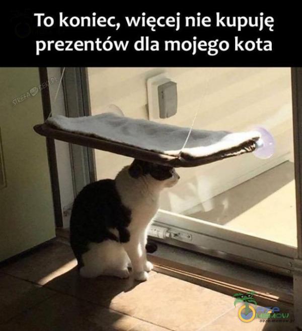 To koniec, więcej nie kupuję prezentów dla mojego kota