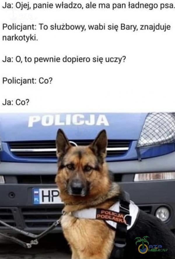 Ja: Ojej, panie władzo, ale ma pan ładnego psa, Policjant: To służbowy; wabi się Bary, znajduje narkotyki: Ja: O, to pewnić dopiero się uczy? Policjant: Co? JarCo?