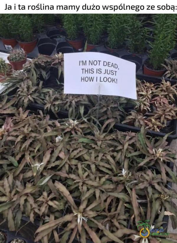 Ją i ta roślina mamy dużo wspólnego ze sabą: NJ AŁÓE DEJp THIS 16 Ig HOW I ŁODjęq