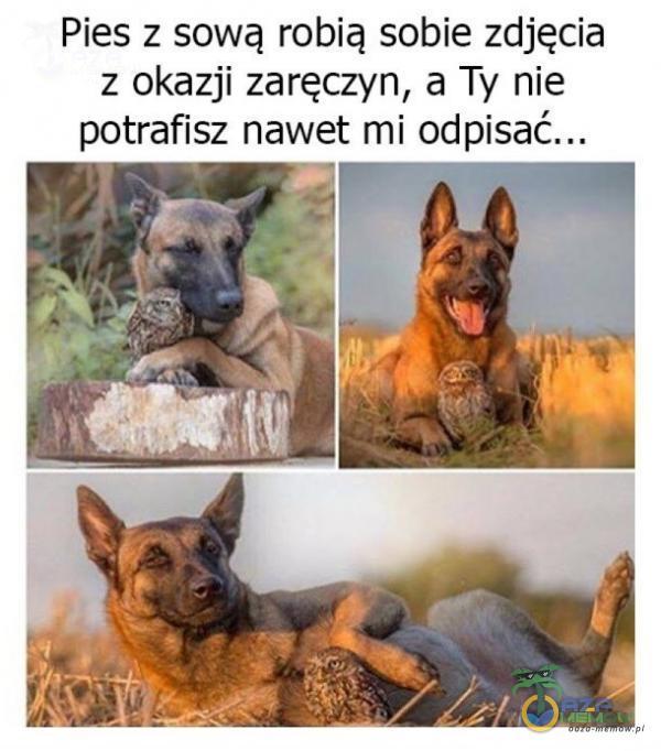 Pies z sową robią sobie zdjęcia z okazji zaręczyn, a Ty nie potrafisz nawet mi odpisać...