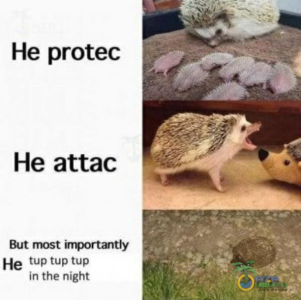 He protec He attac But most importantly He tp tup tup in the might
