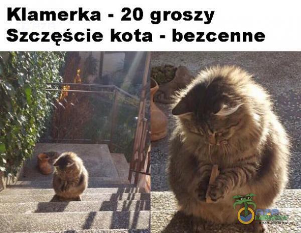 Klamerka - 20 groszy Szczęście kota - bezcenne R m