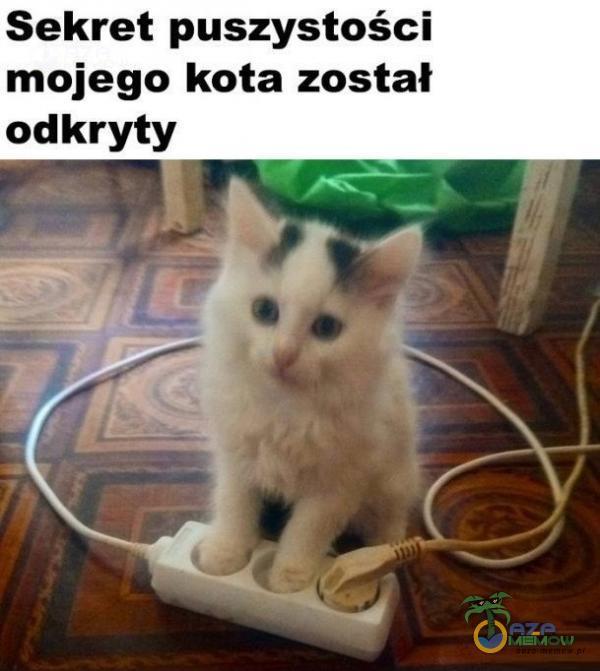 Sekret puszystości mojego kota został odkryty