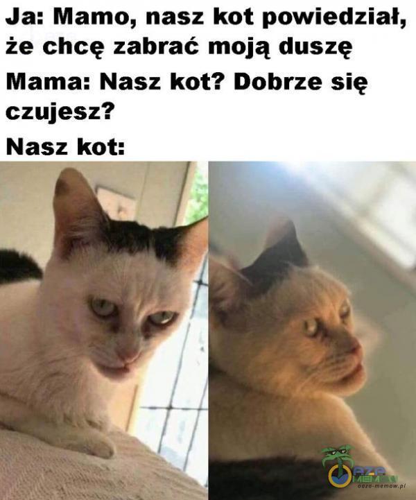 ja: Mamo, nasz kot powiedział, że chcę zabrać moją duszę Mama: Nasz kot? Dohrze się czujesz? Nasz kot: