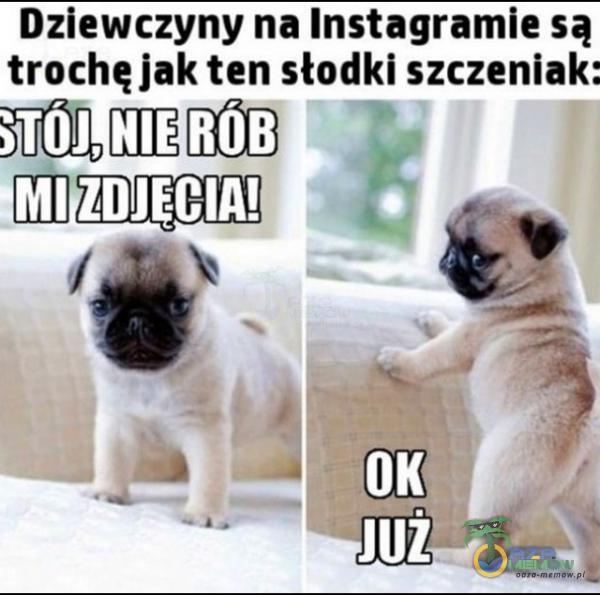 Dziewczyny na Instagramie są truchęlak ten słodki szczeniak: amm-u j,