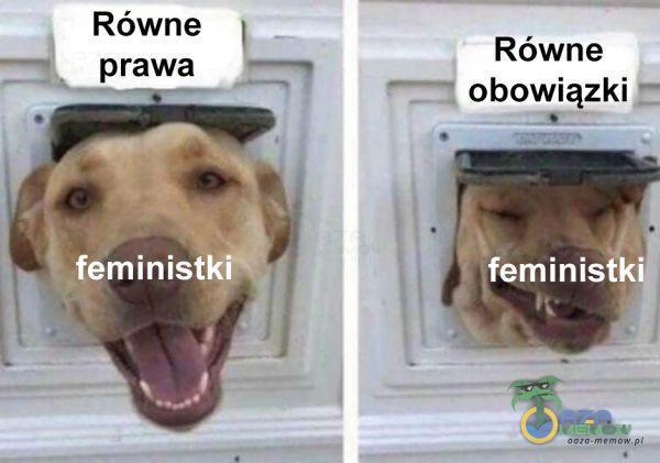 Równe prawa feministki Równe obowiązki feminist