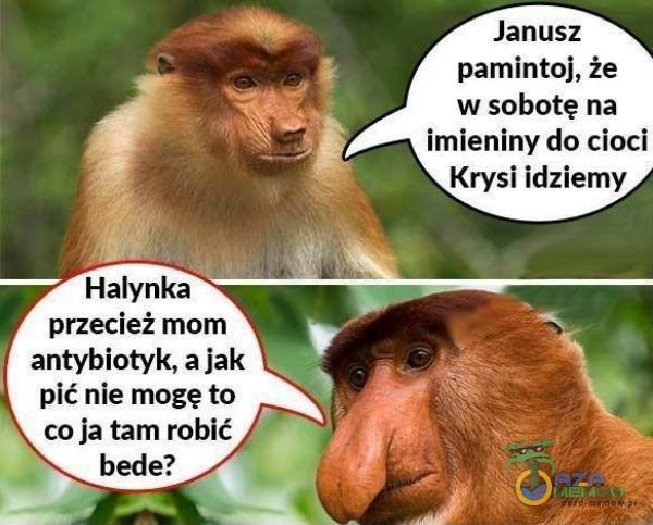 """Janusz pamintoj, że w sobotę na imieniny do cioci """"Krysi idziemy """" antybiotyk, ajak 1 pić nie mogę to"""