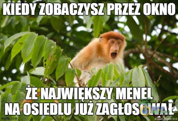 """2. gó Liska go Li LG KA aż. w. © 4 ka k. MĘYJ A"""" JH. ! 11 LAYDE CJA MENEL WIZAŻ LE"""