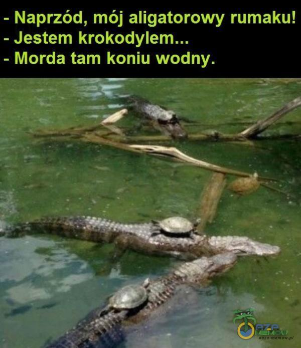 - Naprzód, mój aligatorowy rumaku! - Jestem = Morda tam koniu wodny. — Pi ab ==wf ol TP aglka Mincer: EZ o 6