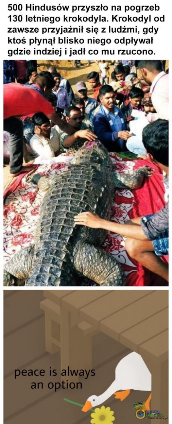 500 Hindusów przyszło na pogrzeb 130 letniego krokodyla. Krokodyl od zawsze przyjaźnił się z ludżmi, gdy ktoś płynął blisko niego odpływał gdzie indziej ijadł co mu rzucono.