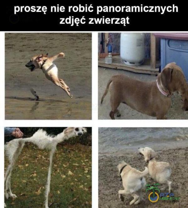 proszę nie robić panoramicznych zdjęć zwierząt