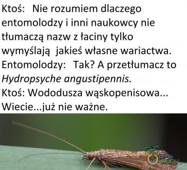 Ktoś: Nie rozumiem dlaczego entomolodzy i inni naukowcy nie tłumaczą nazw z łaciny tylko wymyślają jakieś własne wariactwa. Entomolodzy: Tak? A przetłumacz to Hydropsyche angustipennis. Ktoś: Wododusza wą ż nie ważne.
