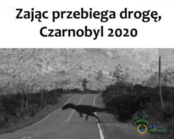 Zając przebiega drogę, Czarnobyl 2020