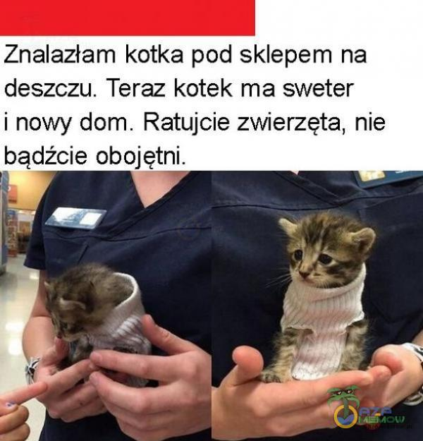 Znalazłam kotka pod sklepem na deszczu. Teraz kotek ma sweter i nawy dom. Ratujcie zwierzęta, nie bądźcie obojętni. 4 A