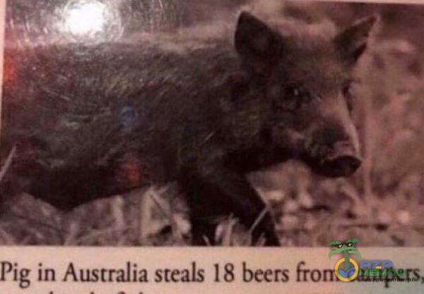Pig m Amrnlmsiwla . Mu-