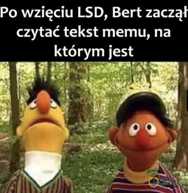 Po wzięciu LSD, Bert zaczął czytać tekst memu, na ole ZUW (E8