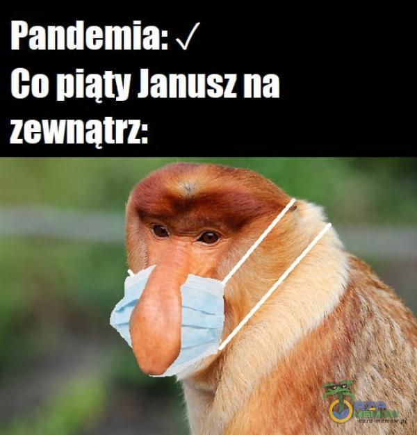 | CCIIANA Go piąty Janusz na PJ JILLUJA