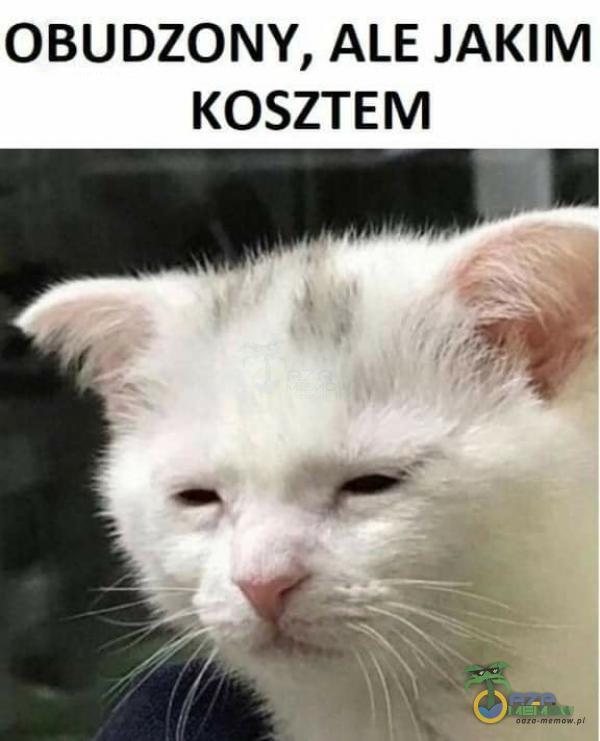 OBUDZONY, ALE JAKIM KOSZTEM