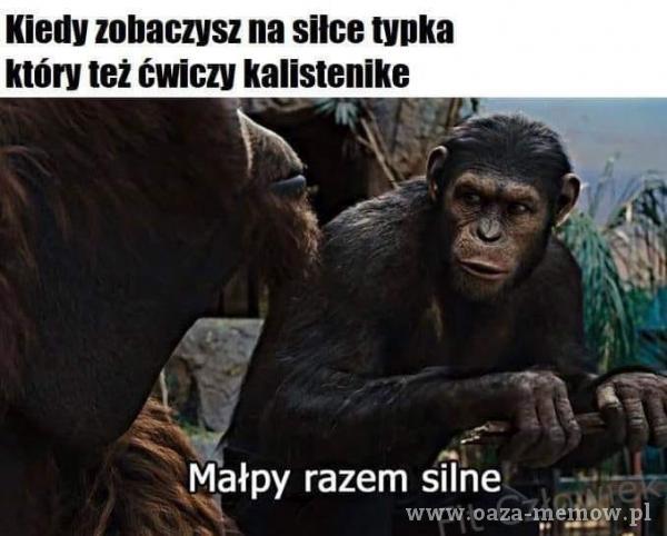 Kiedy zobaczysz na Silce typka który też ćwiczy kalistenike Małpy razem silne