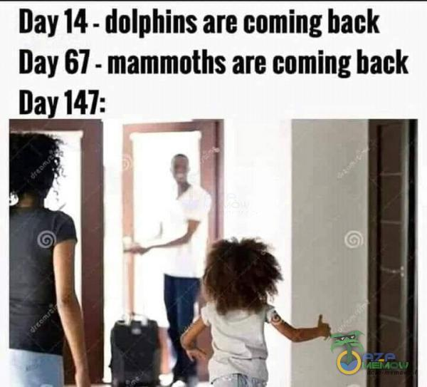 Day 14 - dolphins are ing back Day 67 - mammoths are ing back Day 147: