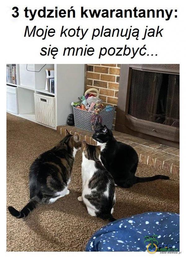 3 tydzień kwarantanny: Moje koty anują jak się mnie pozbyć... a maz p—— EE: