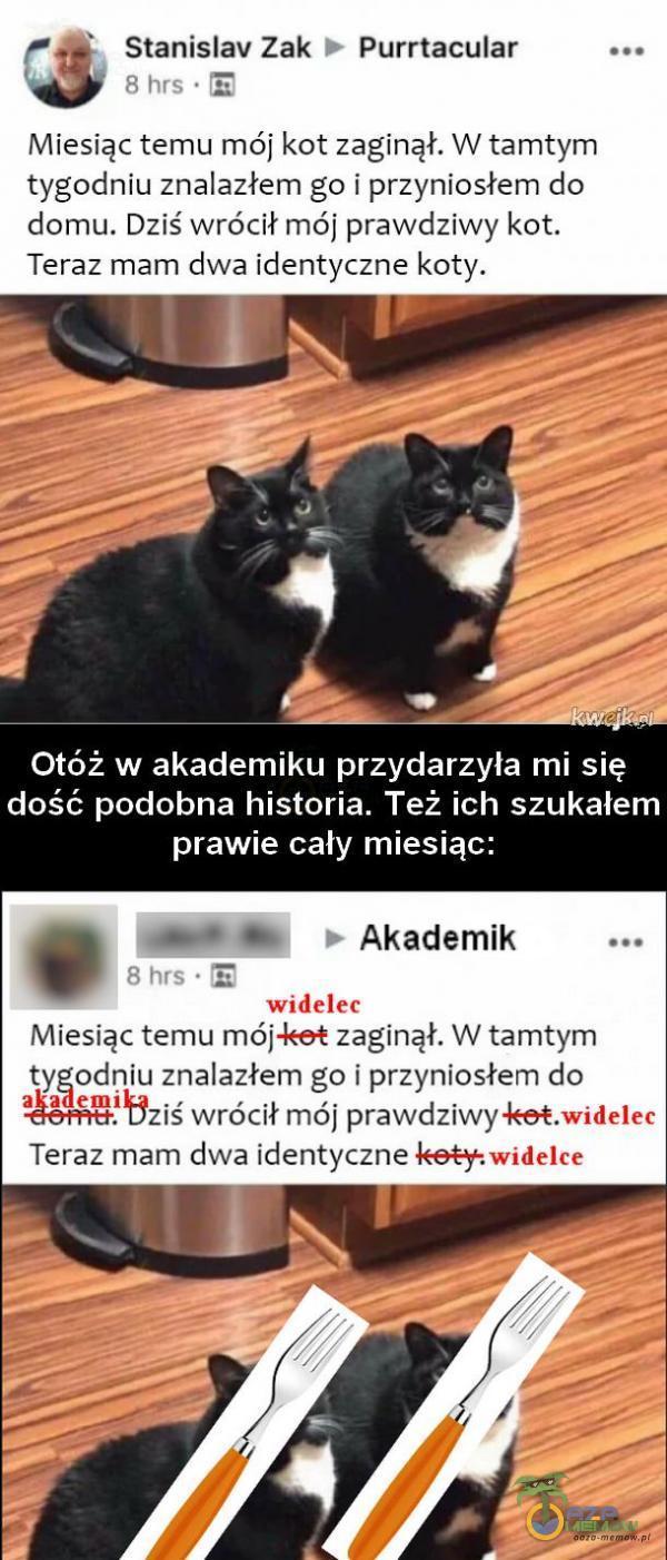 zł 5 Stanislav Zak © Purrtacular way Miesiąc temu mój kot zaginął. W tamtym tygodniu znalazłem go i przyniosłem do domu. Dziś wrócił mój prawdziwy kot. Teraz mam dwa identyczne koty. Otóż w akademiku przydarzyła mi się dość podobna historia. Też ich szukałem prawie cały miesiąc: . 0/8] » Akademik z Miesiąc temu mój:kst zaginął. W tamtym tygodniu znalazłem go i przyniosłem do :   Bziś wrócił mój prawdziwyke Teraz mam dwa identyczne koży: widelce