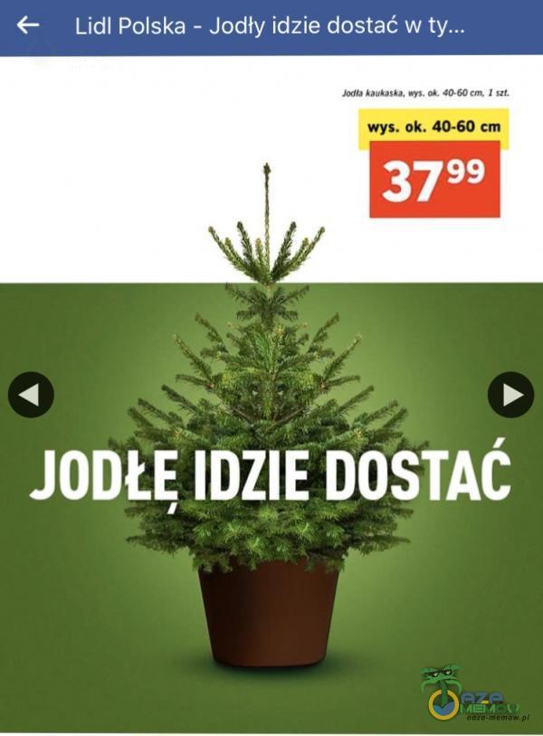Lidl Polska - Jodły idzie dostać w wys. ok. 40-60 cm 3799 JODŁE IDZIE DOSTAĆ