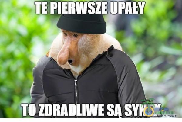 | m ZDRADLIWE SĄ SYNE