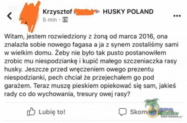 < Krzysztof HUSKY POLAND 5 mm - E Witam, jestem rozwiedziony z żoną od marca 2016, ona znalazla sobie nowego lagasa aja z synem zostaliśmy sami w wielkim domu. Żeby nie bylo tak pusto postanowilem zrobic mu niespodziankę i kupić malego...