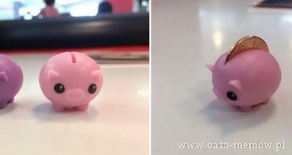 Fajna świnia