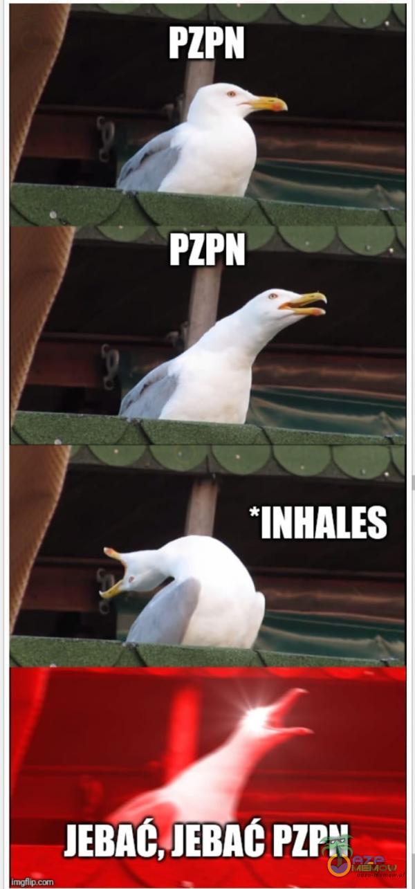 PZPN PZPN *INHAL*** J***C, J***C PZPN