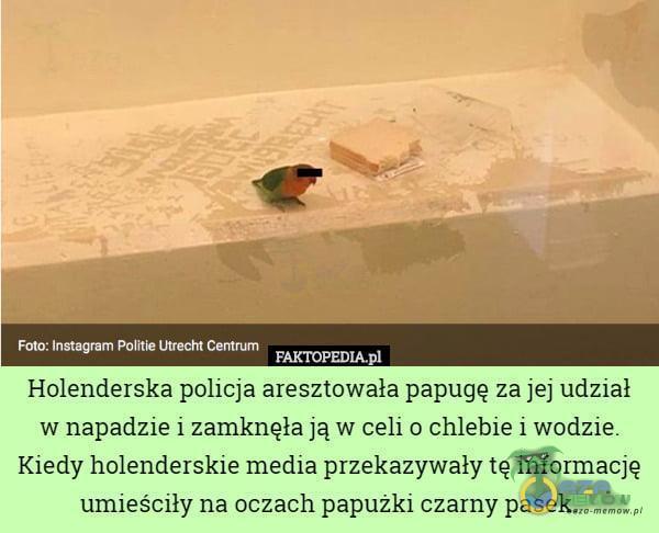 Foto: Instagram Politie Utrecht Centrum FAKTOPEDIAPI Holenderska policja aresztowała papugę za jej udział w napadzie i zamknęła ją w celi o chlebie i wodzie. Kiedy holenderskie media przekazywały tę informację umieściły na oczach papużki...