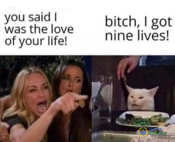 YQU said | bitch, | got was the love of your life! nine lives!